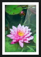 In the pond Picture Frame print