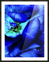 Art of the blue rose 3  Picture Frame print