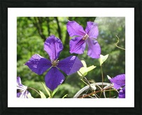 Flower Study -9 Picture Frame print