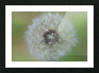 The Depth of a Wish Picture Frame print