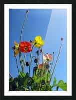 Spring Sky Garden Picture Frame print