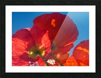 Red Poppy Sky Picture Frame print