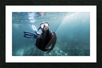 freediver Picture Frame print