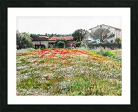 Old Farm House With Poppies Picture Frame print
