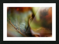 Abstract Mystic and Colourful Leaf 03 Picture Frame print