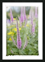 Cone Flowers Picture Frame print