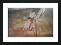 Milk Weed Picture Frame print