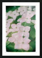 Sea of Pink Picture Frame print