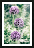Three Purple Flowers Picture Frame print