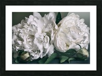 Two Peonies Picture Frame print