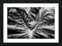 Boldness of Nature Picture Frame print