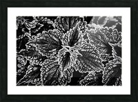 Bold Leaves Picture Frame print