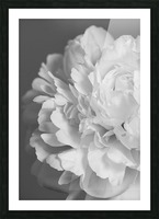 Peony in Black & White Picture Frame print