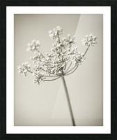 Vintage Flowers Picture Frame print