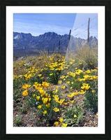 April at Aquirre Springs Impression et Cadre photo
