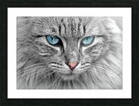 cat animal cat portrait mackerel Picture Frame print