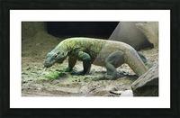 komodo dragon komodo lizard reptile Picture Frame print