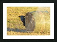 Hay.You Looking For Me Picture Frame print