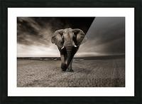 elephant animal africa safari Picture Frame print