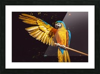 ara parrot yellow macaw bird Picture Frame print