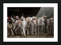 dog herd canine animal pet hounds Picture Frame print