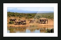 elephant herd of elephants Picture Frame print