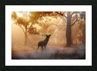 hirsch wild antler nature forest Picture Frame print