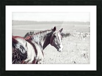 fields of freedom Picture Frame print