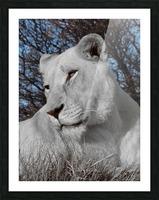 White Lion Female 1030593 Picture Frame print