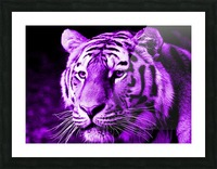 Tiger pop purple Picture Frame print