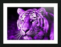 Tiger pop purple Picture Frame print