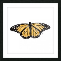 Monarch Butterfly Picture Frame print