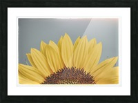 Sun Is Shining Picture Frame print