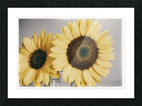 Sunflowers Picture Frame print