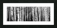 Birch Tree Forest Picture Frame print