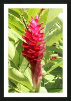 Carribean Beauty Picture Frame print