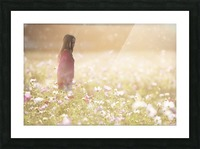 Peaceful Meadow Utah United States Picture Frame print