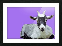 Goat popart purple Picture Frame print