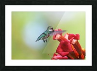 Feeding On The Trumpets Picture Frame print