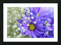 Babys Breath on Blue Daisy Picture Frame print