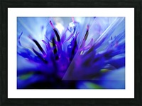 Abstract Pop Color Flower Photography 01 Picture Frame print
