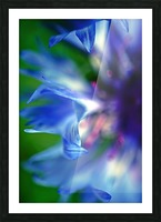 Abstract Pop Color Flower Photography 16 Picture Frame print