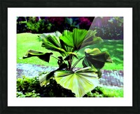 P29 - Licuala peltata Leaves Picture Frame print