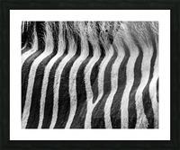 Zebra Details Picture Frame print