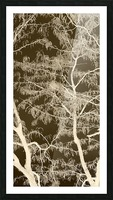 Lacey Sepia Tree middle Picture Frame print