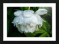 After the Rain Picture Frame print