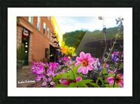 Beautiful pink and purple flowers in European city Picture Frame print