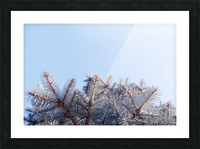 Winter Pines Picture Frame print
