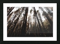 20190802_182121 Picture Frame print