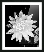 White Is the love  Impression et Cadre photo